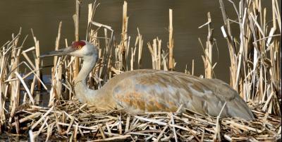 Nesting-Crane