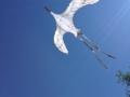 Crane kite