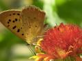 Butterfly-Moth2