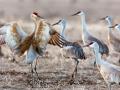 Crane Meeting