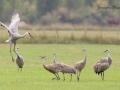 Crane behavior
